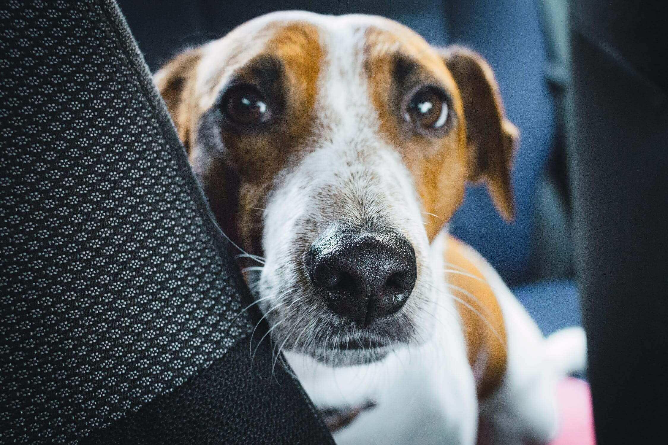 Kofferraum Hundekissen